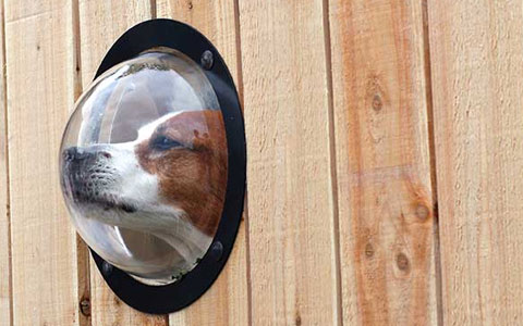 Dog gadgets every dog owner should have