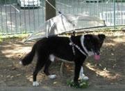dog umbrella