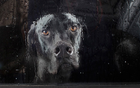Dogs staring out of car windows photos