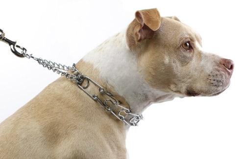 prong-collar.jpg (500×325)