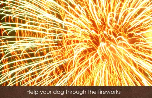 Helping your dog through fireworks season