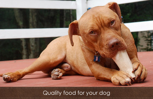 Why isn`t quality dog food easily accessible?