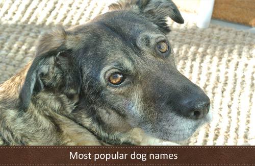 Most popular dog names 2012
