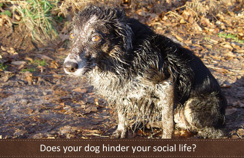 Does your dog affect your social life?