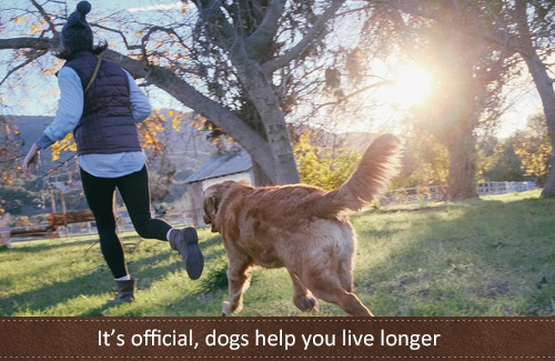 Dogs help you live longer – it's official
