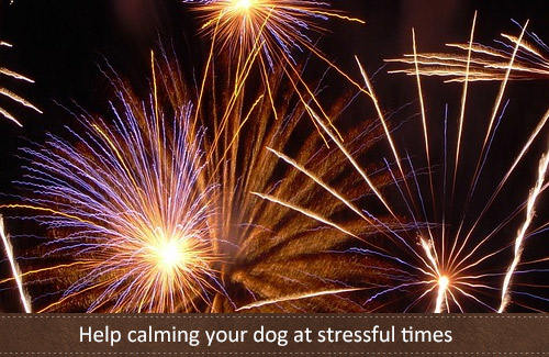 Help calming your dog at stressful times