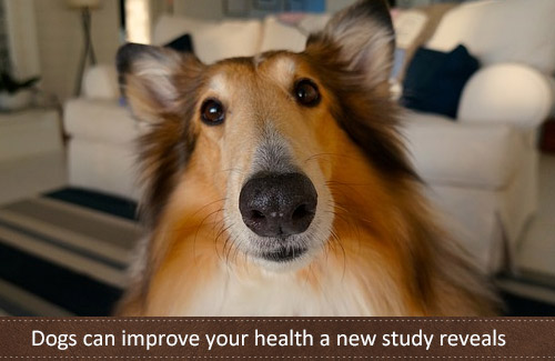 A Study Shows Dog Ownership Can Reduce Chance of Asthma